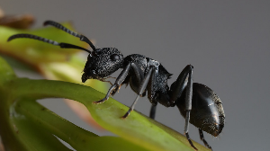Ant like robot to heal humans from internal injuries