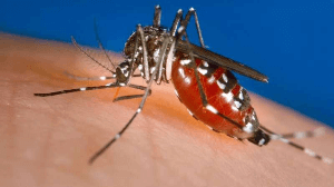 With Dengue on the rise, here's how you can prevent it
